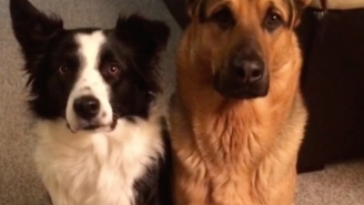 You've Never Seen Anything Cuter Than A Dog Hugging Its Best Friend (Who Is Also A Dog)
