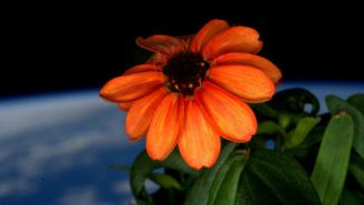 This Is What The First Flower Grown In Space Looks Like