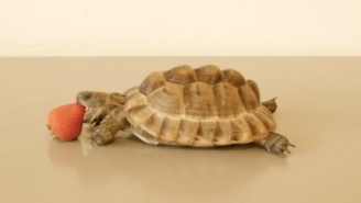 Alan Rickman's Dying Wish Was For You To Watch This Tortoise Video To Save Refugees