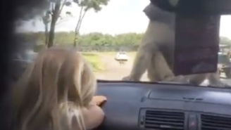This Little Girl Has Years Of Therapy Ahead Of Her Over What She Saw At The Safari Park