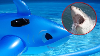 A Woman Had A Live Shark Thrown In Her Pool As The Worst Prank Ever