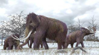 Oregon State Found Lots Of Woolly Mammoth Bones Under Their Stadium