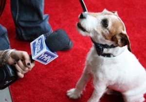 Why Didn't The SAGs Include Uggie The Dog In The 'In Memoriam' Segment?