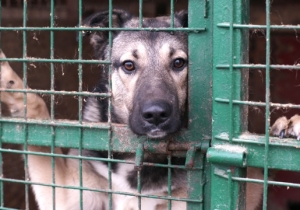 An Animal Shelter Euthanizes Dogs With A Bullet Because 'It's Cheaper'
