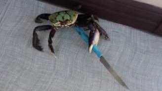 Aww! Look At That Cute Crab! Wait A Sec, He's Got A Knife!