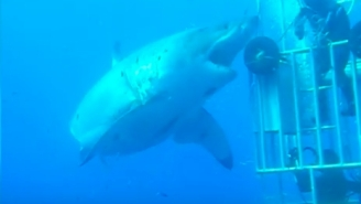 There's New Footage of 'The Largest Shark Ever Filmed' And It's Huge