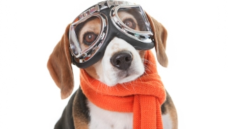 The Time Has Finally Come For A Reality Show About Dogs Flying Airplanes