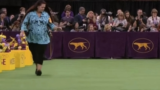 Experience The Surreal Majesty That Is The Westminster Dog Show With The Dogs Removed