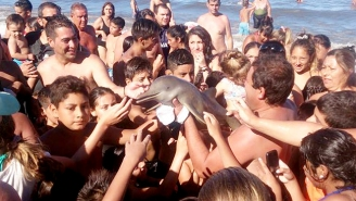 A Baby Dolphin Was Tortured To Death So Tourists Could Take Selfies With It