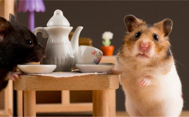 hamster having tea