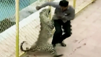A Leopard Got Loose At A School In India
