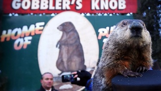 Punxsutawney Phil Did Not See His Shadow This Year, So What Does That Mean For An Early Spring?