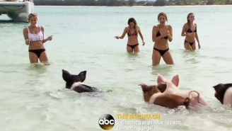 Bikini-Clad Women Getting Attacked By Wild Pigs May Be The Greatest Thing To Happen In 'The Bachelor' History