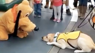 This Service Dog In Training Is So Excited To Meet Pluto At Disneyland