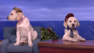 'Puppy Conan' With Larry King, Sia, And Donald Trump Is Much Better Than Real 'Conan'