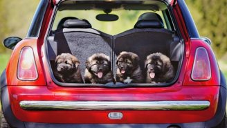Uber Is Delivering Puppies In Several Major Cities And Everything Makes Sense Now
