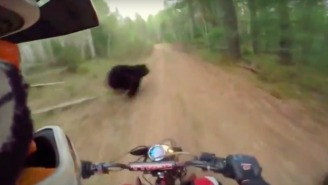 These Dirt Bikers Prove They Have Nerves Of Steel With This Near-Miss With A Bear