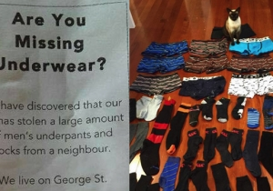 No One Can Stop This Cat From Stealing All The Underwear From Her Neighborhood