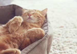 The 'Caffeine Power Nap' Is The Scientifically Perfect Snooze For National Napping Day