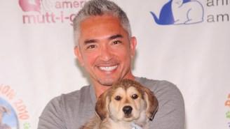 'Dog Whisperer' Cesar Millan Is Being Investigated For Animal Cruelty