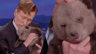 Conan Snuggles With An Impossibly Cute Bear Cub That Will One Day Kill Him