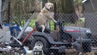 This Reporter Did Not Expect To Find A Dog Riding On A Lawnmower While Surveying Storm Damage