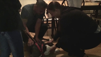 This Pit Bull Was Finally Reunited With His Family After Three Long Years
