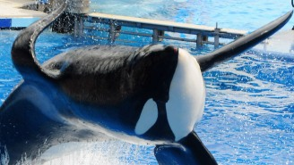 SeaWorld Announces That Killer Whale Tilikum's Health Is Deteriorating Due To A Lung Infection