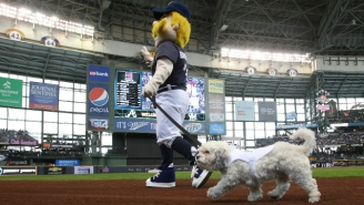 There's A Crazy Conspiracy Theory About The Death Of The Brewers' Unofficial Dog Mascot