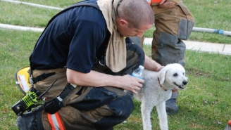 Melt At This Puppy's Smile Of Joy As Firefighters Come To Its Rescue