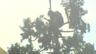 The Internet Got Its First, True Folk Hero With #ManInTree