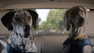 50 Questions About The Lincoln Commercial Where Matthew McConaughey Talks To His Dogs