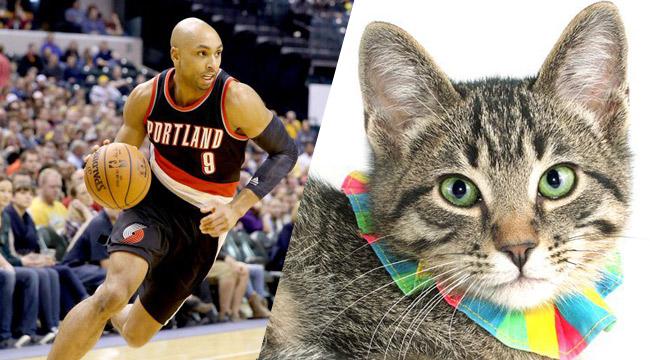 Portland.CatSplit-Uproxx