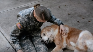 This Old Dog Practically Cries When Her Owner Comes Home From Basic Training