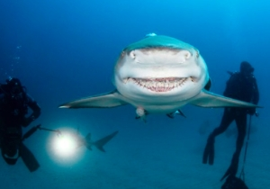This Smiling Shark Is A Real-Life 'Finding Nemo' Character