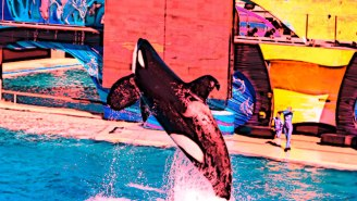 Looking Deeper At SeaWorld's Promise To Stop Breeding Orcas