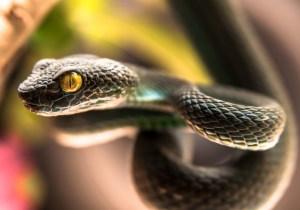 Alzheimer's Has A Powerful New Treatment: Snake Venom