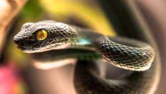 Alzheimer's Has A Powerful New Treatment: Snake Venom
