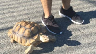 NYC Craigslist Ad: Man Seeks A Tortoise Walker To Walk His Tortoise For $10 Per Hour