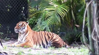 Florida Zookeeper The 'Tiger Whisperer' Mourned After Fatal Tiger Attack