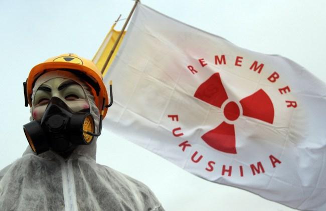 radioactive wild boars roaming fukushima