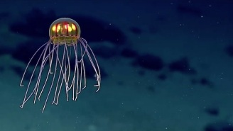 Ignite Your Curiosity With This Magical Video Of A Jellyfish That Looks Like Some Sort Of Alien Species