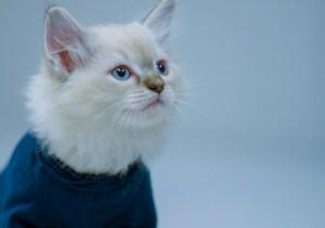 The 'Keanu' Trailer Got An All Cat Remake