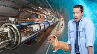 The Large Hadron Collider Was Temporarily Shut Down By A Runaway Weasel
