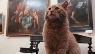 Meet The Cat Who's Got A Better Job Than Most College Grads