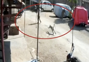 Try Not To Laugh Watching This Monkey Straight Up Dropkick An Unsuspecting Dude