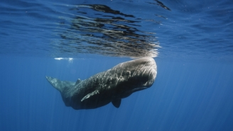 Mysterious Sperm Whale Deaths Continue — With Marine Litter Found In Their Stomachs