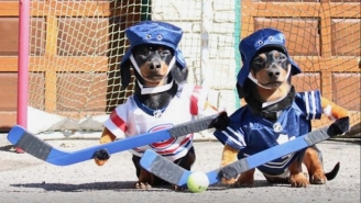 Hockey Is Good, But Dogs Playing Hockey Is Even Better