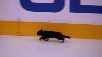 A Black Cat Snuck Onto The Ice During Sharks-Predators Warmups, Which Is Bad News For Someone