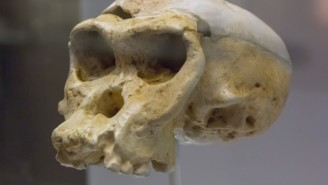 Neanderthals May Have Died Out From STIs, Thanks To Our Ancestors